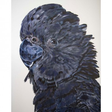 Parrot-Sq400